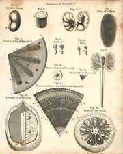 1802  Anatomy Of Plants Transverse Sections Ash Branch Lemon Copperplate