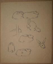 Beau Dessin Ancien Étude Lapin Animalier LUBIN DE BEAUVAIS 1900