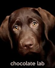 SO CUTE Puppies Ser.: Chocolate Lab : A Gift Journal for People Who Love...