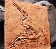 00004000 Jurassic Pterodactyl Authentic Juvenile Pterodactyl Fossil Cast Bavaria, Germany
