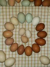 12+ Fresh & Fertile Chicken Hatching Eggs- Assorted Barnyard Mix including Rare