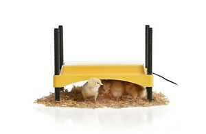Brinsea Products Ecoglow 20 Safety 600 Brooder for Chicks Or Ducklings, Yellow/B