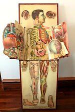 1886 Whites Physiological Chromolithograph Folding Manikin Female & Male Anatomy