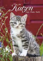 Katzen 2019 Kalender Korsch Verlag