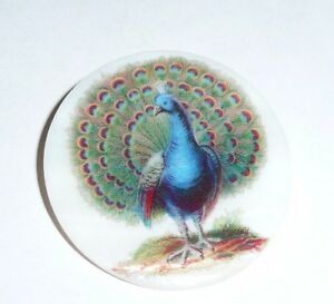 """Wonderful Peacock Bird on Mother of Pearl Button - MOP Button 1-3/8""""s Peacock"""