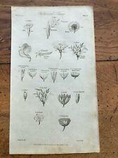 1812 elements of botany print - botanical terms !