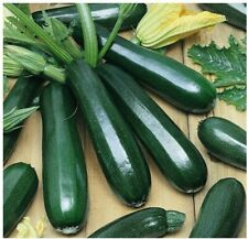 Zucchini Black Garden Seed Zucchini Seeds Heirloom Non Gmo Free Shipping