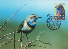 Bluethroat Luscinia Svecica Mint Art Bird Maxi Card FDC Finland 2003