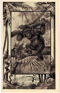 Mintz African Safari Chimpanzee 1910