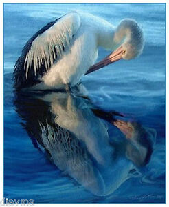 © ART -  Illustration Pelican Preening Bird Wildlife Original Artist print by Di