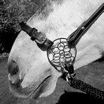 PS Pferdeartikel