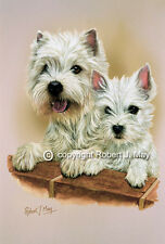 West Highland Terrier & Pup Print by Robert May
