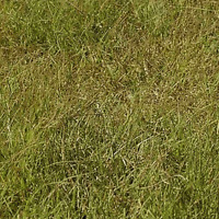 1 Lb Buffalo Grass Native Grass Seeds - Everwilde Farms Mylar Seed Packet