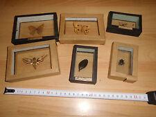 6 alte kleine Schaukästen, Falter, Insekten, gebraucht