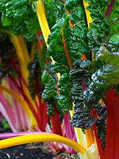 Silverbeet Rainbow Chard (150 seeds)-Organic Heirloom from Life-Force Seeds