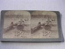 """""""Bicycle Rider Crashing into an Apple Peddler"""" c.1902 Stereo Card"""