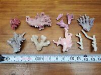 Real Coral Aquarium Lot Of 10