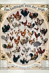 Le / La Volaille Poultry Du Monde Panneau Métallique Plaque en Étain 20 X 30 CM