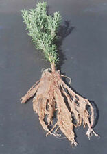 1lb SoilMoist Fines Bare Root Dip Makes 40 Gallons Gel Plant Tree Packing Medium