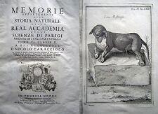 ZOOLOGIA  ORNITOLOGIA IPPOLOGIA ANIMALI MOSTRUOSI