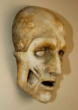 Death Human Skull Medical Anatomical Face Anatomy Oddity Gothic Science