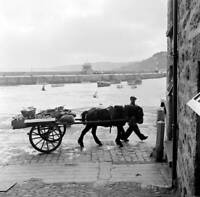 Horse And Cart In St Ives Cornwall 1954 OLD PHOTO 2