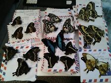 AFRICAN PAPILIONID  ASSORTMENT - FIFTY ( 50 ) A1 UNMOUNTED SPECIMENS