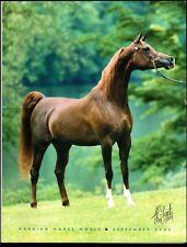 Arabian Horse World - September 2003 - Vol. 43, No. 12