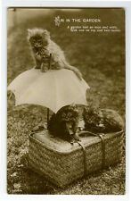 c 1912 Cute Fun in the Garden Fluffy Little Cat photo postcard