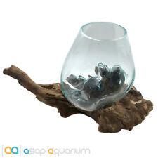 Betta Fish Bowl Unique Molten Glass on Teak Driftwood M166 Free USA Shipping