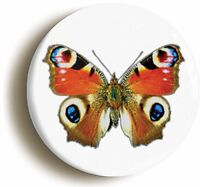 PEACOCK BUTTERFLY BADGE BUTTON PIN (Size is 1inch/25mm diameter)