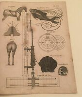 Antique Print -1806 Original Steel Engraving - Horse Nicking-Orrery- Oftrea