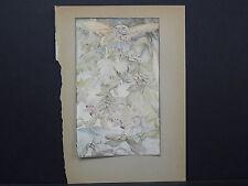 Botanicals, Floral, Edward J. Detmold, c. 1913 #05