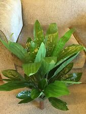 Artificial  70cm Tall & 17 Leaves Plants