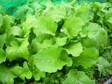 Grelos de Santiago semillas originales garantizada germinacion