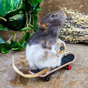 y38 Taxidermy Oddities Curiosities Skateboard Rat Bee collectible mount display