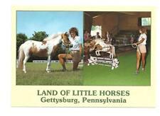 GETTYSBURG PA Miniature Little Performing Horse Land #1