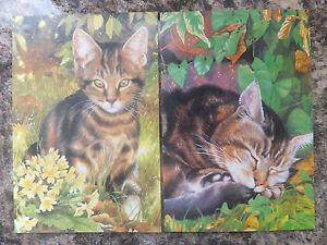 252: GC-44 * TABBY KITTEN / CAT IN GARDEN GREETINGS CARD * BLANK INSIDE *