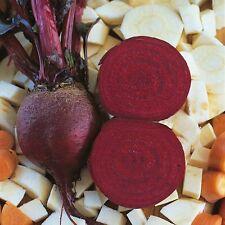 Barbabietola-Detroit Globe organico - 250 Semi