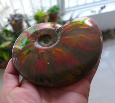 570g A+++ Top Quality Natural Iridescent Ammonite Fossil Madagascar T23#