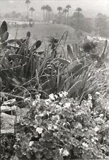 Paul Wolff & Tritschler Vintage Gelatinesilberabzug Kanaren Gran Canaria 30/40er