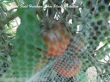20 Indian Zebra Historical Heirloom Organic Tomato Seeds From Arkansas