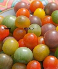 TOMATE CEREZA ARCOIRIS   cherry mix  50  Semillas Seeds
