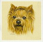Yorkie Yorkshire Terrier Miniature Art Print by UK Artist Lynn Paterson