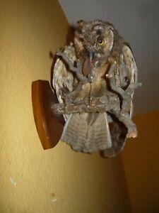 Old Owl Taxidermy Prepared Stuffed Bird