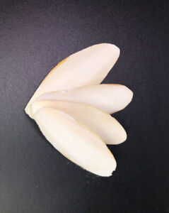 """All Natural Cuttlebone up to 4"""" (4 pack) Free Shipping, 100% natural!"""
