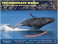 "The Humpback Whale, an Endangered Species card by ""PostcardsToSaveThePlanet"""