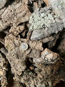 Mini Mixed Cork Bark Perfect for Small Spiderlings And Other Inverts - 500g Box