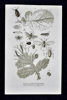 1859 Didot Freres Print - Agriculture Pest Insects Beetle Weevil Caterpillar Fly