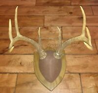 Very Nice 8 POINT WHITETAIL DEER BUCK MOUNTED ON WOOD PLAQUE from 2006 read